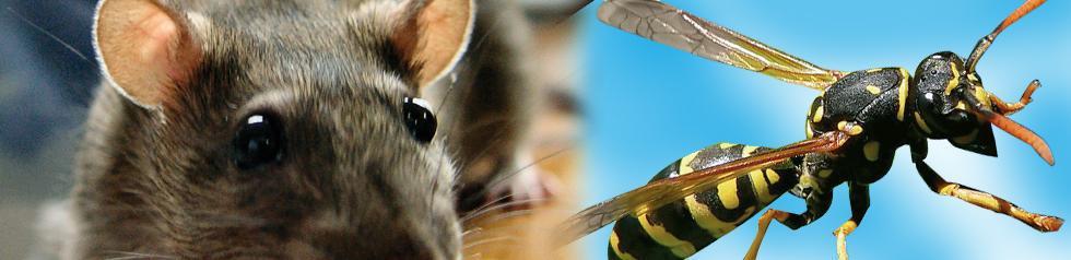 Poste appâtage Rat.